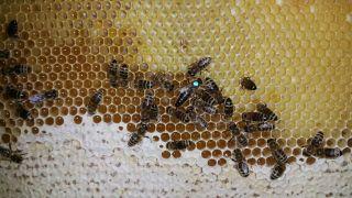 (25) Červen - Včelí matka s dělnicemi na stanovišti č. 2